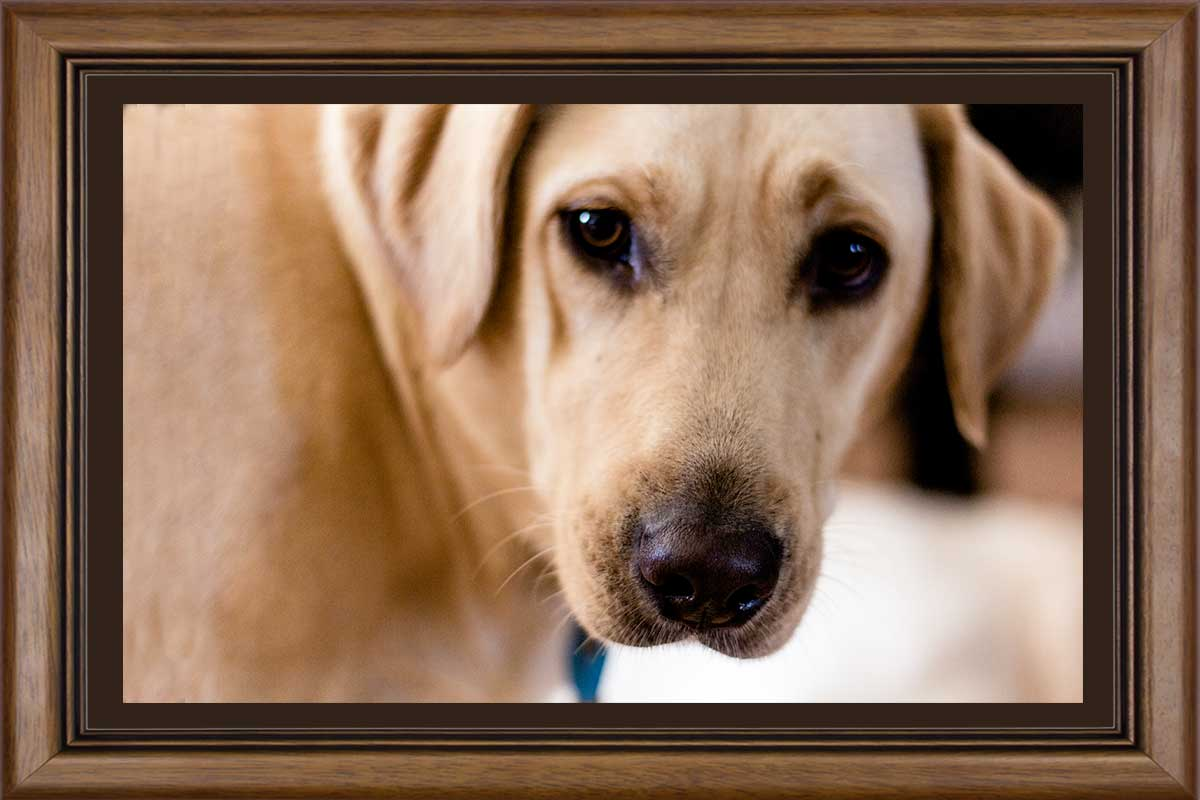 VIP-Picture-Framing-JD-Suarez-Photography-kacie