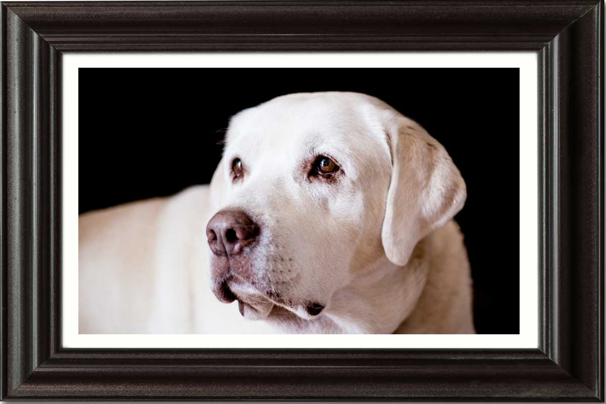 VIP-Picture-framing-JD-Suarez-Photography-griff